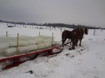 Harvested iceblocks being pulled by a horses at a Swartzentruber community. Photo by Karen Johnson-Weiner.