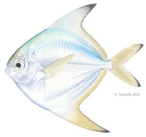 Harvestfish-VKells