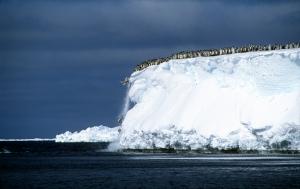 penguin plunge 4