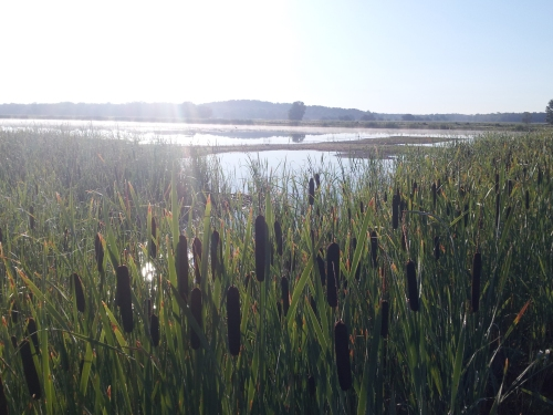 Sunrise over a well-managed marsh at Northern Montezuma Wildlife Management Area