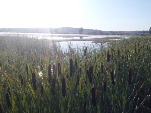 Sunrise over a well-managed marsh at Northern Montezuma Wildlife Management Area