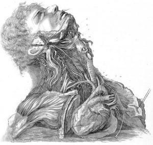 """Engraving by J. Grant from a drawing by Charles Bell, Plate II: """"Nerves of the Neck"""" from Charles Bell's A Series of Engravings Explaining the Course of the Nerves (1803). Quarto (29 cm high). Courtesy of the Wellcome Library, London. From Carin Berkowitz's article """"Authorship, Patronage, and Illustrative Style in Anatomy Folios, 1700–1840."""""""