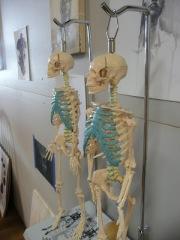 Mr Bones 1